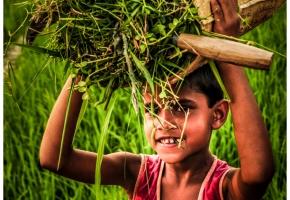 bangladesz12