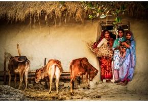bangladesz14