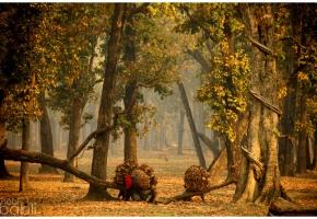 Nepal_Las_1