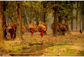 Nepal_Las_2